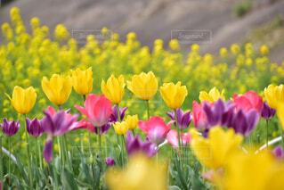 花畑の写真・画像素材[4317240]