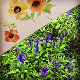花,屋外,草木,配置