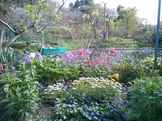 水辺の花園のクローズアップの写真・画像素材[2215594]