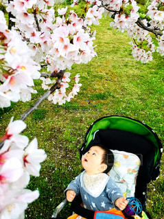 初めてのお花見散歩の写真・画像素材[2286669]