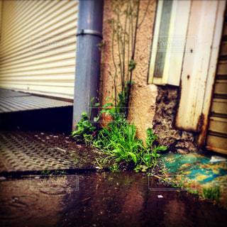 雨,植物,梅雨,シャッター,草木