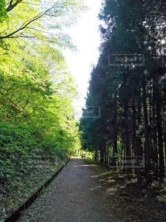 森林の写真・画像素材[2211030]