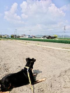 犬,芝生,屋外,晴れ,散歩,レジャー,お散歩,ライフスタイル,おでかけ