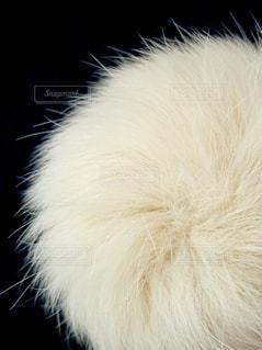 白いファーの写真・画像素材[2279363]