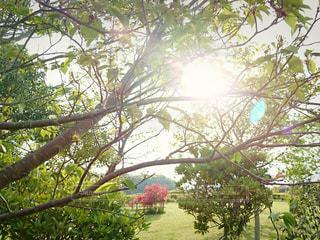 空,公園,屋外,太陽,葉,光,樹木,草木,まぶしい