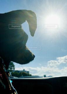 犬,空,太陽,雲,影,シルエット,光,車窓,見つめる,日中