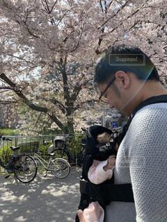 公園,桜,晴れ,子供,お花見,赤ちゃん,パパ,お散歩,父,おでかけ,抱っこひも