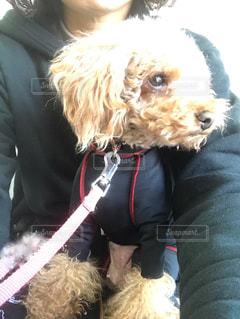 犬,ファッション,動物,黒,人物,人,可愛い,トイプードル,コーディネート,愛犬,コーデ,お揃い,ブラック,リード,黒コーデ,保湿効果,医療用