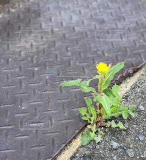 道端に咲く雑草の写真・画像素材[4619030]