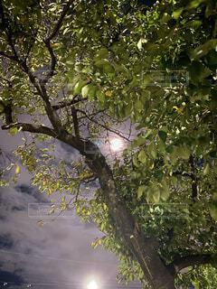 自然,風景,空,秋,屋外,葉,樹木,月,満月,草木,中秋の名月