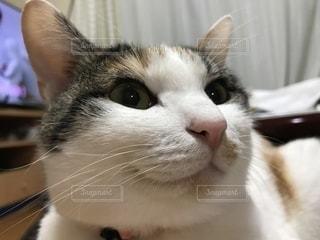 猫のクローズアップの写真・画像素材[2358001]