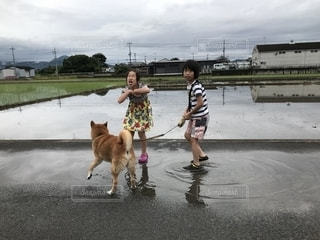 水たまりで遊ぶ子供!嫌がる犬の写真・画像素材[2196463]
