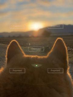 空,動物,屋外,太陽,光,日の出,見つめる,左助,左助 犬 柴犬