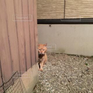 建物の上に座っている猫の写真・画像素材[2202949]