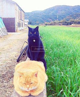 芝生に覆われた野原の上に座っている猫の写真・画像素材[2203025]