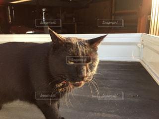 窓の前に座っている猫の写真・画像素材[2203065]