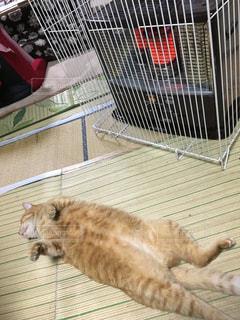 ケージの上に横たわっている猫の写真・画像素材[2203080]