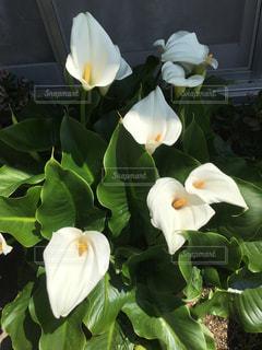 植物の上の白い花の写真・画像素材[2203105]