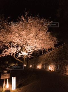 夜にライトアップされた街の写真・画像素材[2211028]