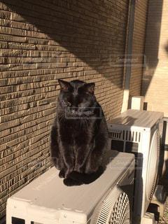 建物の前に座っている猫の写真・画像素材[2211063]