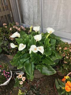 植物の花瓶の写真・画像素材[2211129]