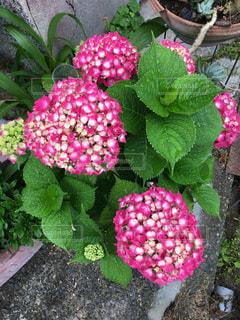花園のクローズアップの写真・画像素材[2211275]