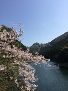 背景に山がある木の写真・画像素材[2229108]