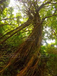 森の木の写真・画像素材[2223388]