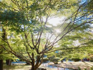 木,屋外,太陽,緑,散歩,レジャー,お散歩,ライフスタイル,おでかけ,お出かけ