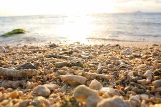 サンゴと夕陽の写真・画像素材[2328415]