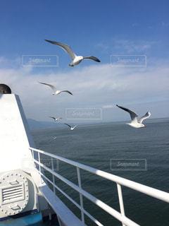 水域の上を飛ぶカモメの群れの写真・画像素材[2328421]