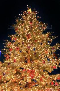 クリスマスツリーの写真・画像素材[2824362]