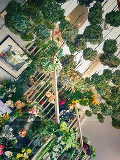 観葉植物の部屋の写真・画像素材[2852458]