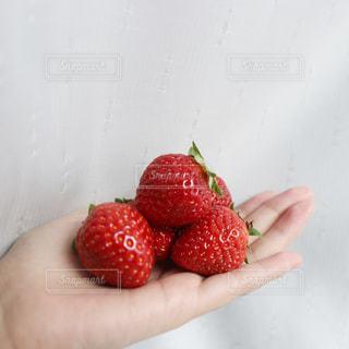 果物を持つ手の写真・画像素材[3023174]