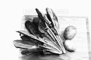 食べ物,野菜,絵画,食品,食材,フレッシュ,ベジタブル,スケッチ,図面,黒と白,野菜フォト,絵画フォト
