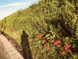 自然,風景,花,お散歩