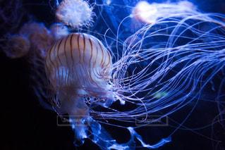 クラゲのクローズアップの写真・画像素材[2266105]