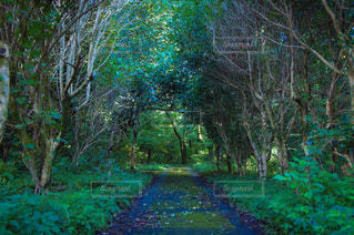 森,緑,散歩,レジャー,野外,お散歩,ライフスタイル,お出かけ