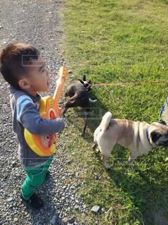 子ども,犬,パグ,動物,屋外,散歩,ギター,ペット,少年,若い,歌,歌声