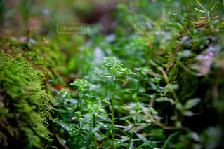 森林の苔の写真・画像素材[2205095]