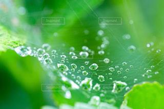 水滴と蜘蛛の巣の写真・画像素材[2205099]