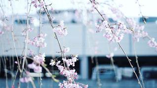 花の写真・画像素材[1980613]