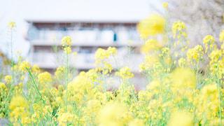 花の写真・画像素材[1980668]