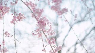 花の写真・画像素材[1980771]