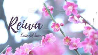 花のクローズアップの写真・画像素材[2114235]