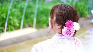 和服美人の後ろ姿の写真・画像素材[2304641]