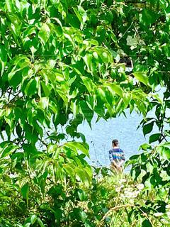 木の上に座っている人々のグループの写真・画像素材[2262428]
