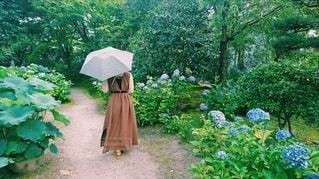 女性,1人,風景,花,森林,雨,傘,屋外,樹木,紫陽花,雫,草木,ガーデン
