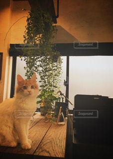 窓の前に座っている猫の写真・画像素材[2763796]