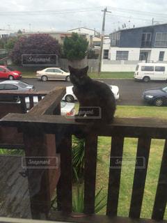 友だち,猫,動物,家,ペット,人物,友達,NZ,ネコ